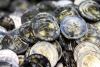 Самые востребованные методы зачисления средств на счет и снятия их в лучших мировых казино